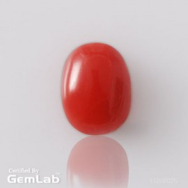 Astrological Coral Fine 2+ 1.4ct