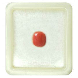 Certified Red Coral Premium 5+ 3ct