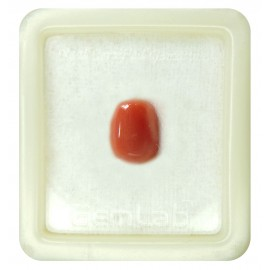 Certified Red Coral Premium 6+ 4ct