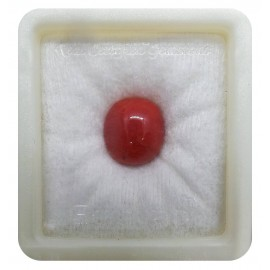 Certified Red Coral Premium 10+ 6ct